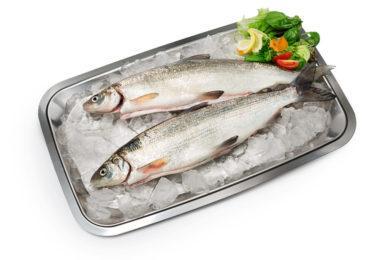 Hätälän kokonainen siika | Kalatuotteet | Hätälä