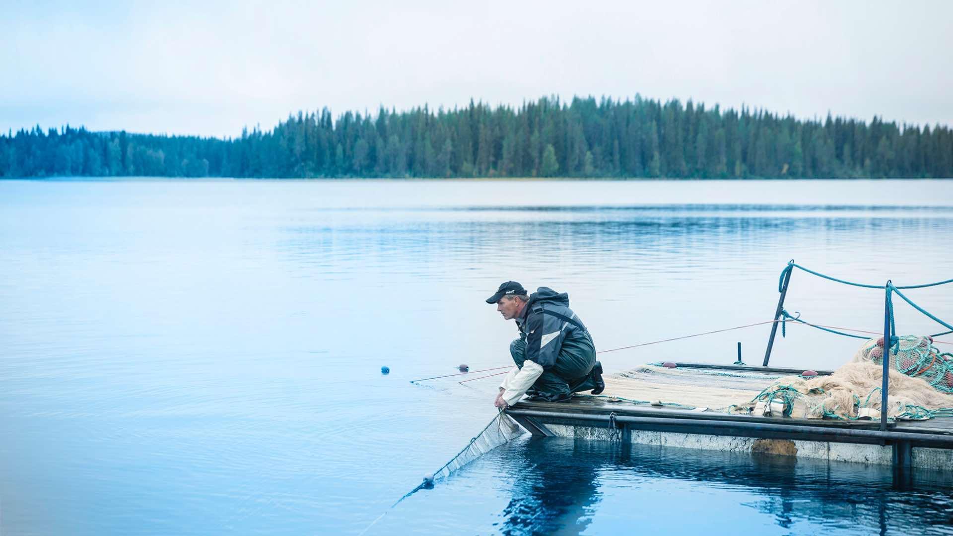 Kuusamon muikku | Kalaa kotimaisilta kalastajilta | Hätälä