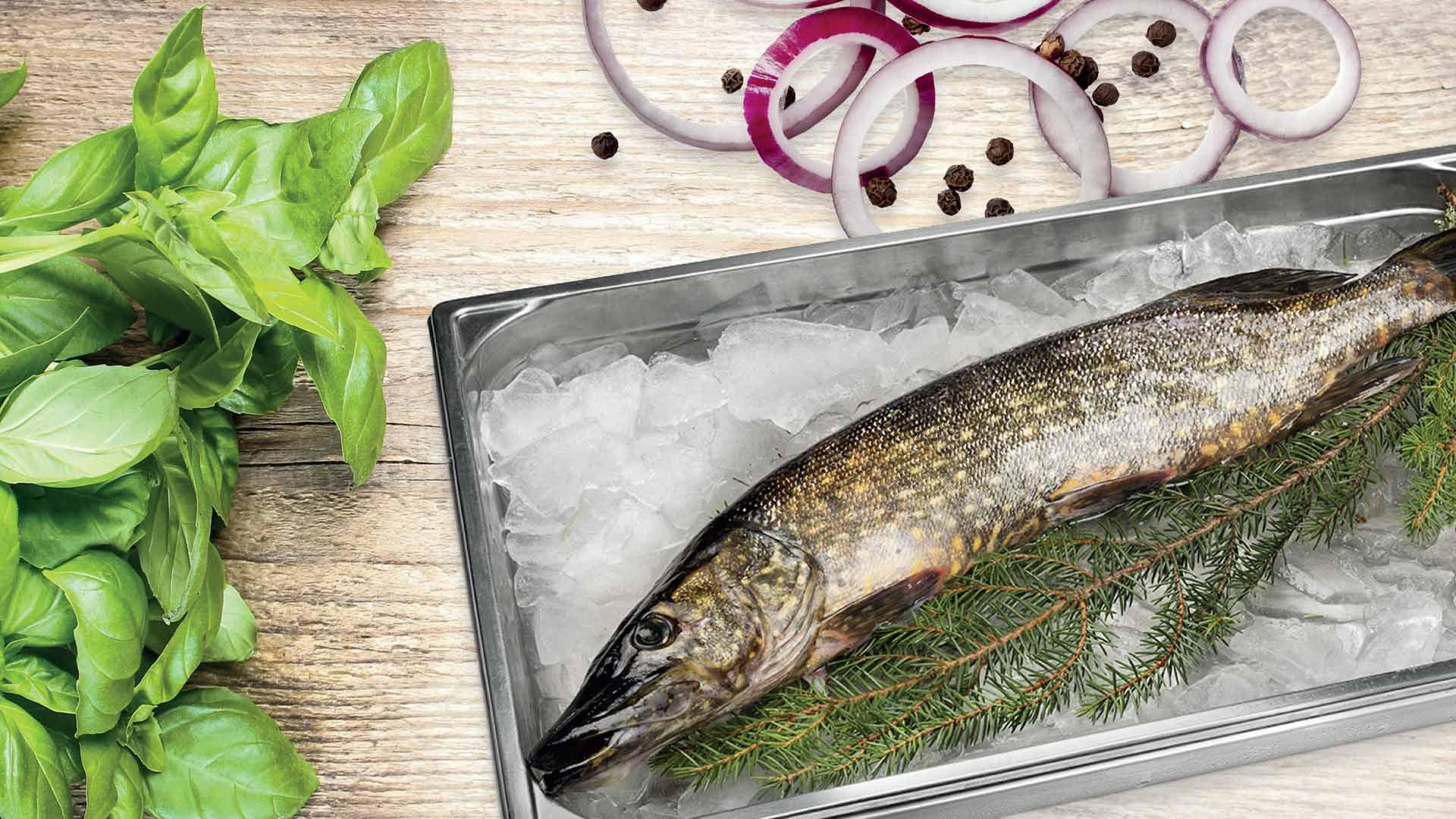 Hauen ruodonpoisto | Kalankäsittelyvinkit | Hätälä