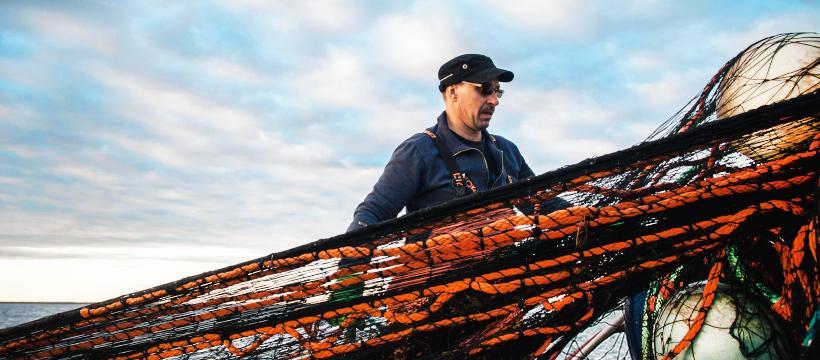 Hätälän muikku tulee kotimaisilta kalastajilta