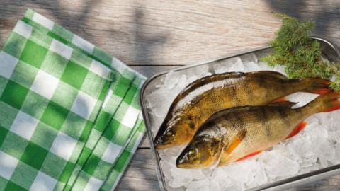 Kotimainen luonnonkala ahven | Kauden kala | Hätälä